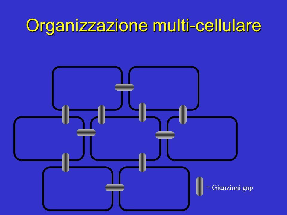 Organizzazione multi-cellulare = Giunzioni gap