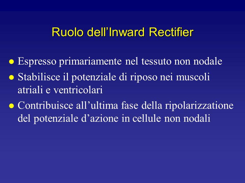 Canali Inward Rectifier 0 -120-100-80-60-40-200204060 Corrente V m (mV)