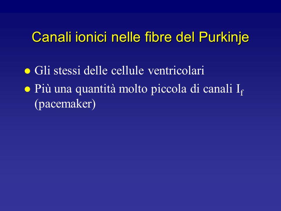 Canali ionici nelle cellule nodali 0 -50 200 msec Canali I f (pacemaker) Canali del Ca +2 volt.-dip. (T) Canali del K + volt.dip. Potenziale di membr.