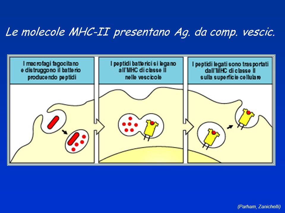 (Parham, Zanichelli) Le molecole MHC-II presentano Ag. da comp. vescic.