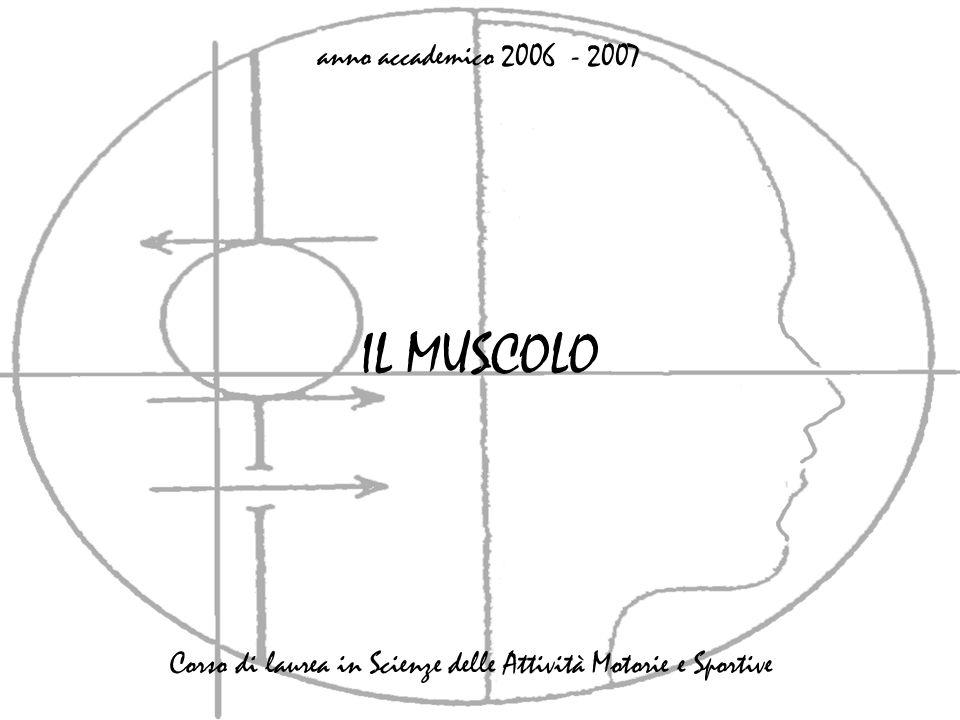 IL MUSCOLO anno accademico 2006 - 2007 Corso di laurea in Scienze delle Attività Motorie e Sportive