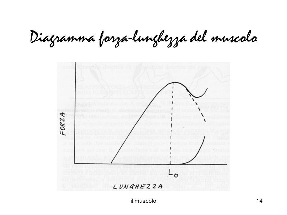 il muscolo14 Diagramma forza-lunghezza del muscolo