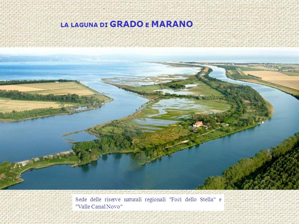 LA LAGUNA DI GRADO E MARANO Sede delle riserve naturali regionali
