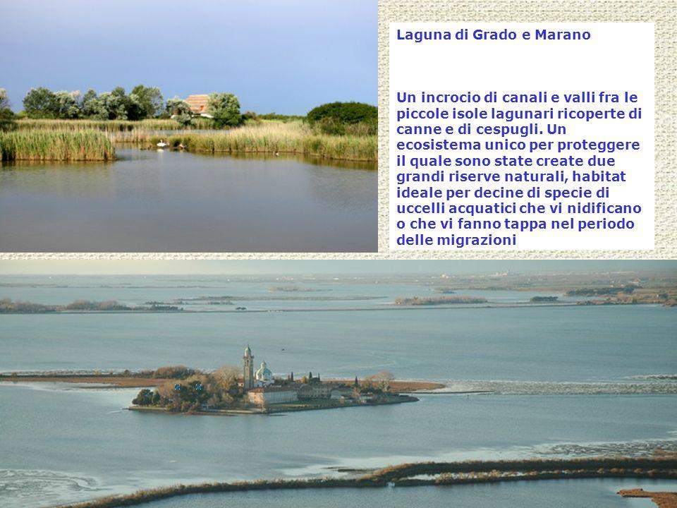 Laguna di Grado e Marano Un incrocio di canali e valli fra le piccole isole lagunari ricoperte di canne e di cespugli. Un ecosistema unico per protegg