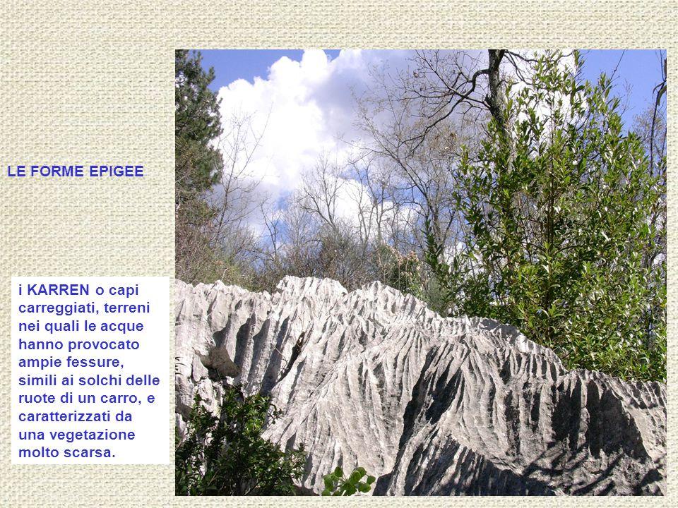 i KARREN o capi carreggiati, terreni nei quali le acque hanno provocato ampie fessure, simili ai solchi delle ruote di un carro, e caratterizzati da u