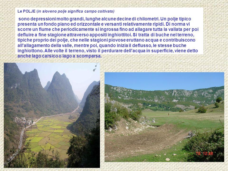 Le POLJE (in sloveno polje significa campo coltivato) sono depressioni molto grandi, lunghe alcune decine di chilometri. Un polje tipico presenta un f
