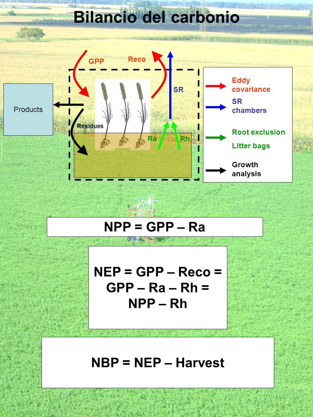 Bilancio del carbonio Products Residues GPP Reco SR Ra Rh Eddy covariance SR chambers Root exclusion Litter bags Growth analysis NPP = GPP – Ra NEP =