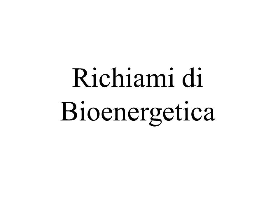 Richiami di Bioenergetica