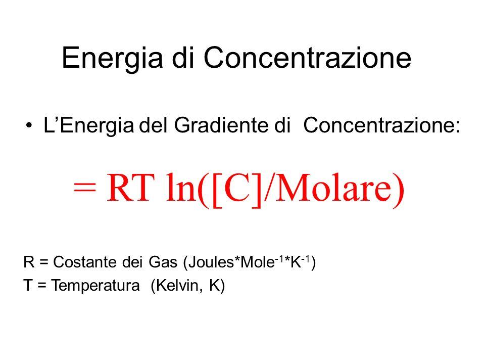 Energia di Concentrazione LEnergia del Gradiente di Concentrazione: = RT ln([C]/Molare) R = Costante dei Gas (Joules*Mole -1 *K -1 ) T = Temperatura (