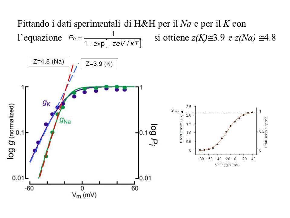 Fittando i dati sperimentali di H&H per il Na e per il K con lequazione si ottiene z(K) 3.9 e z(Na) 4.8 Z=4.8 (Na) Z=3.9 (K) -80-60-40-2002040 0 0.5 1
