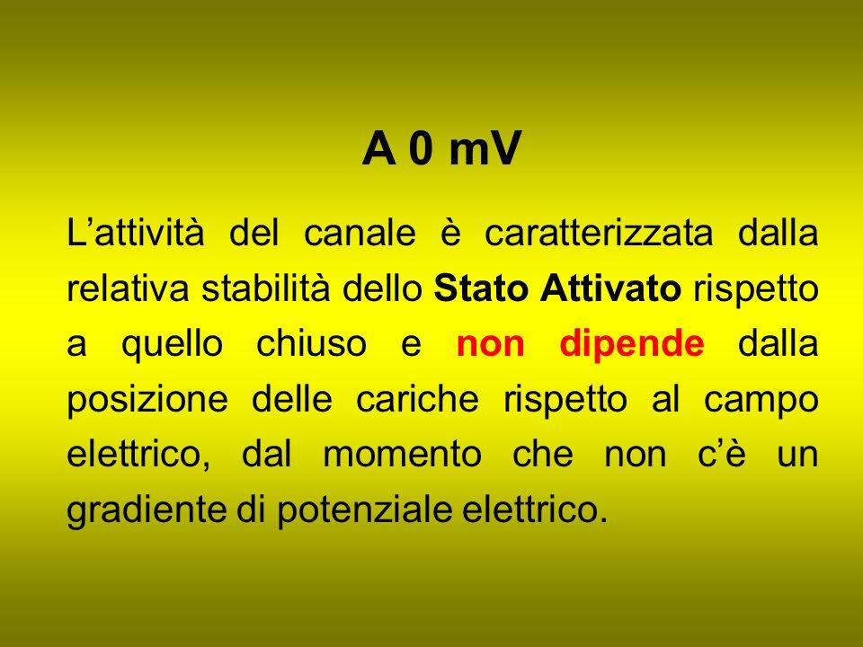 A 0 mV Lattività del canale è caratterizzata dalla relativa stabilità dello Stato Attivato rispetto a quello chiuso e non dipende dalla posizione dell