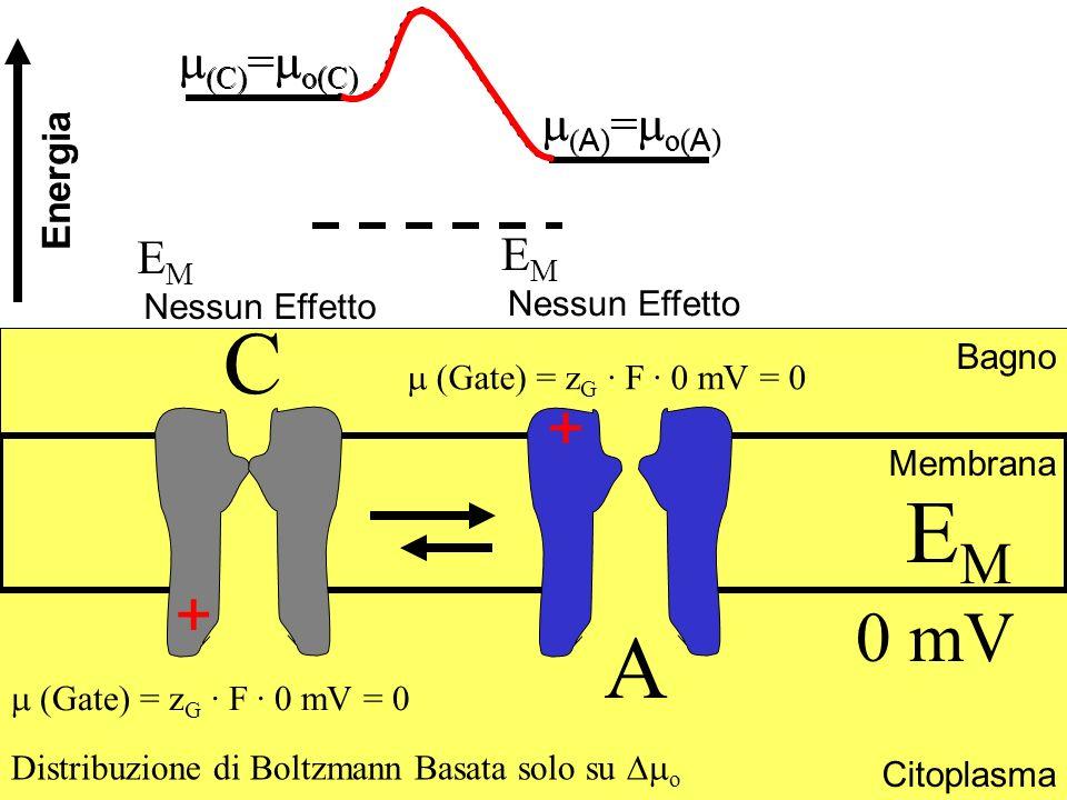 A ) = o( A ) C) = o(C) Bagno Citoplasma Membrana EMEM 0 mV Distribuzione di Boltzmann Basata solo su o E M Nessun Effetto E M Nessun Effetto A ) = o(