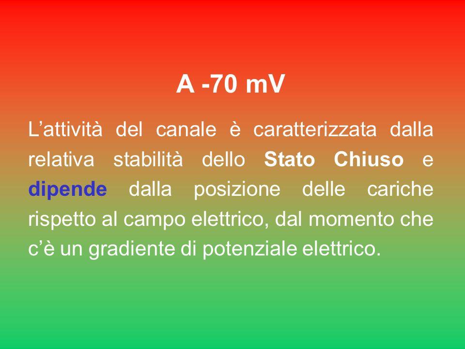 A -70 mV Lattività del canale è caratterizzata dalla relativa stabilità dello Stato Chiuso e dipende dalla posizione delle cariche rispetto al campo e