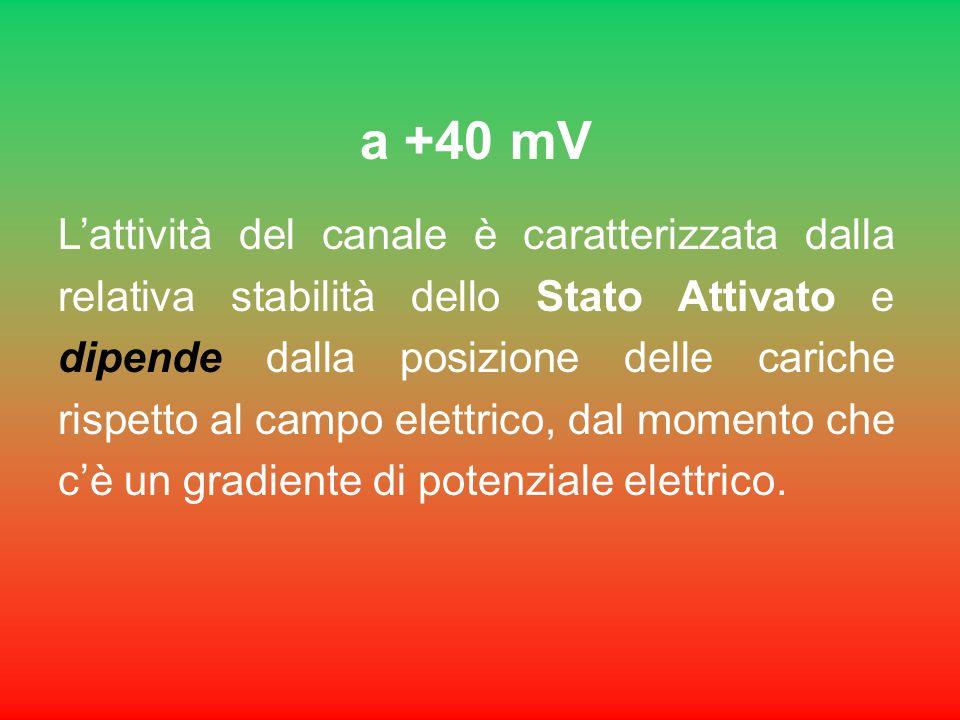 a +40 mV Lattività del canale è caratterizzata dalla relativa stabilità dello Stato Attivato e dipende dalla posizione delle cariche rispetto al campo