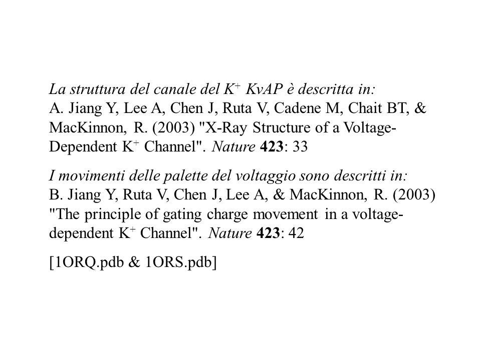 La struttura del canale del K + KvAP è descritta in: A. Jiang Y, Lee A, Chen J, Ruta V, Cadene M, Chait BT, & MacKinnon, R. (2003)