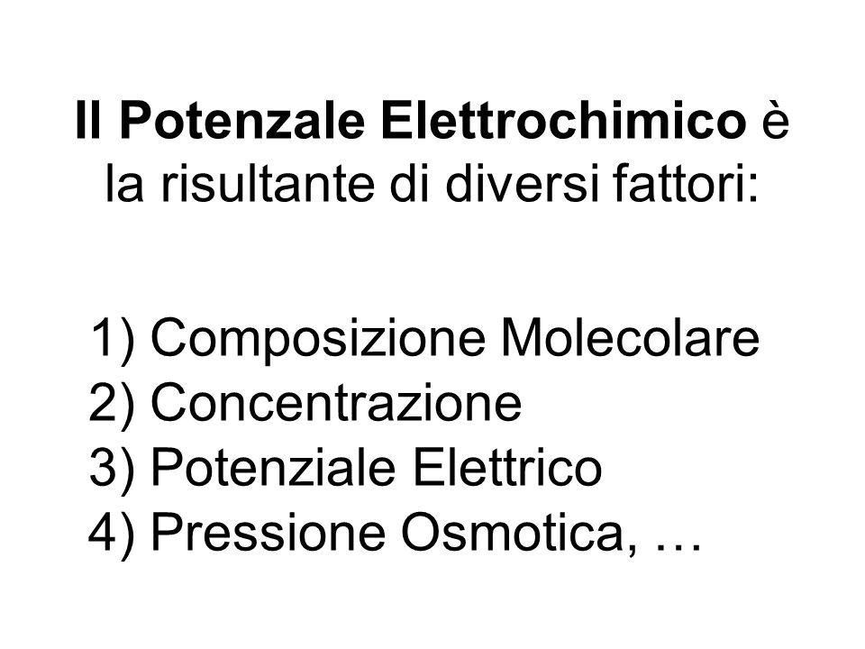 Il Potenzale Elettrochimico è la risultante di diversi fattori: 1) Composizione Molecolare 4) Pressione Osmotica, … 2) Concentrazione 3) Potenziale El