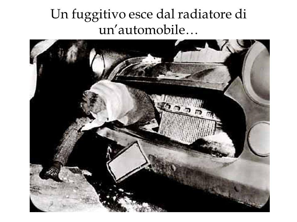 Un fuggitivo esce dal radiatore di unautomobile…