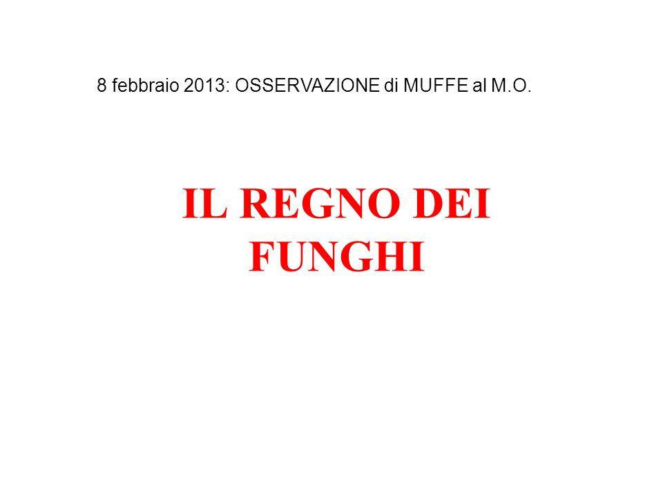 IL REGNO DEI FUNGHI 8 febbraio 2013: OSSERVAZIONE di MUFFE al M.O.