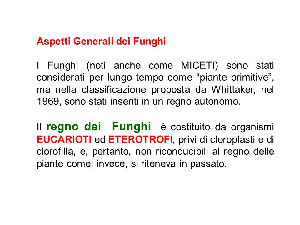 Aspetti Generali dei Funghi I Funghi (noti anche come MICETI) sono stati considerati per lungo tempo come piante primitive, ma nella classificazione p