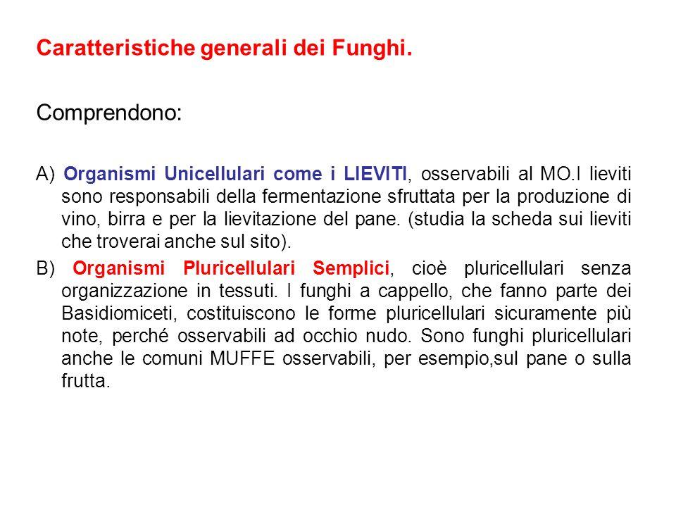 Caratteristiche generali dei Funghi. Comprendono: A) Organismi Unicellulari come i LIEVITI, osservabili al MO.I lieviti sono responsabili della fermen