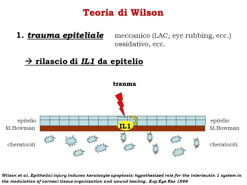 trauma epitelio M.Bowman cheratociti epitelio M.Bowman cheratociti IL1 Teoria di Wilson trauma epiteliale 1. trauma epiteliale meccanico (LAC, eye rub