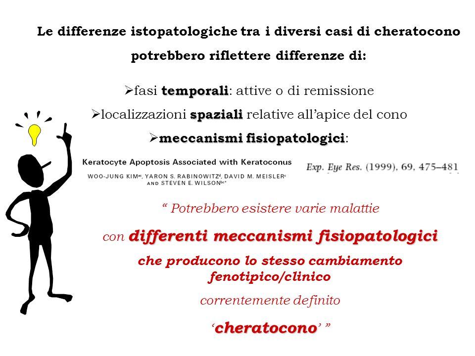 Le differenze istopatologiche tra i diversi casi di cheratocono potrebbero riflettere differenze di: temporali fasi temporali : attive o di remissione