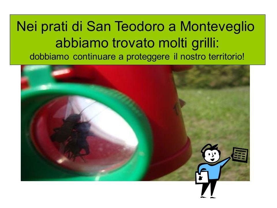 Nei prati di San Teodoro a Monteveglio abbiamo trovato molti grilli: dobbiamo continuare a proteggere il nostro territorio!