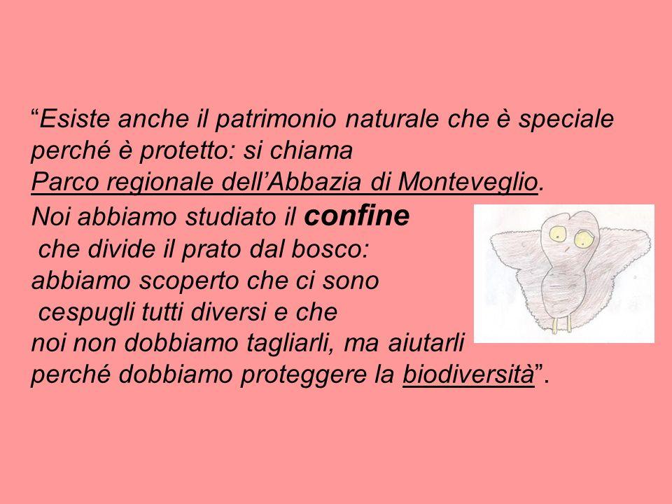 Esiste anche il patrimonio naturale che è speciale perché è protetto: si chiama Parco regionale dellAbbazia di Monteveglio. Noi abbiamo studiato il co
