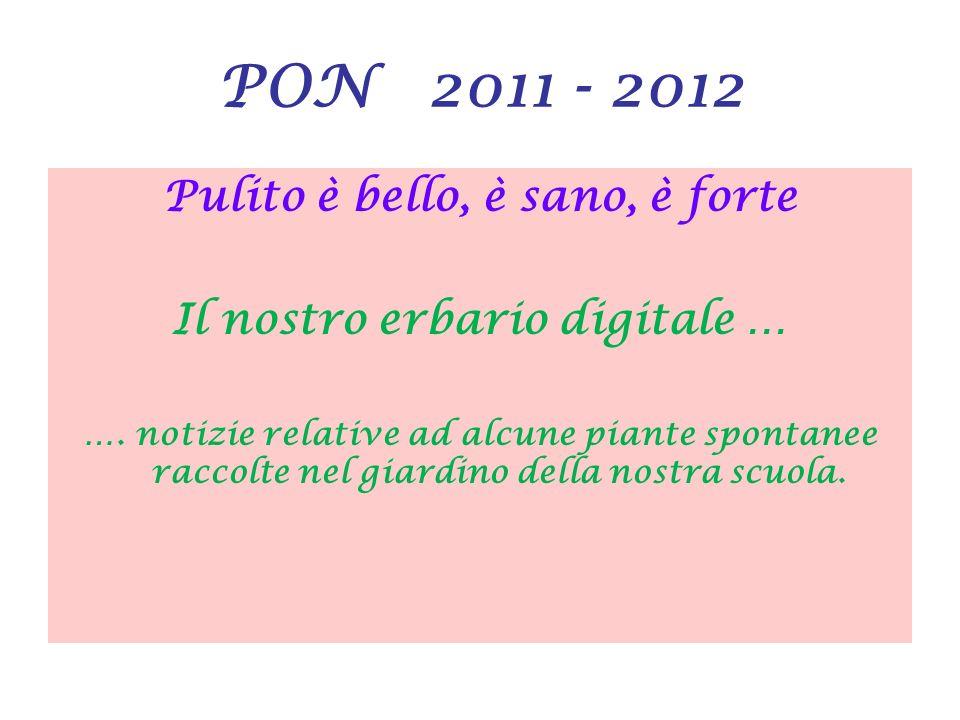 PON 2011 - 2012 Pulito è bello, è sano, è forte Il nostro erbario digitale … …. notizie relative ad alcune piante spontanee raccolte nel giardino dell