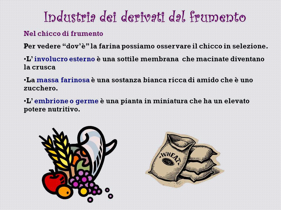 Industria dei derivati dal frumento Nel chicco di frumento Per vedere dovè la farina possiamo osservare il chicco in selezione. L involucro esterno è