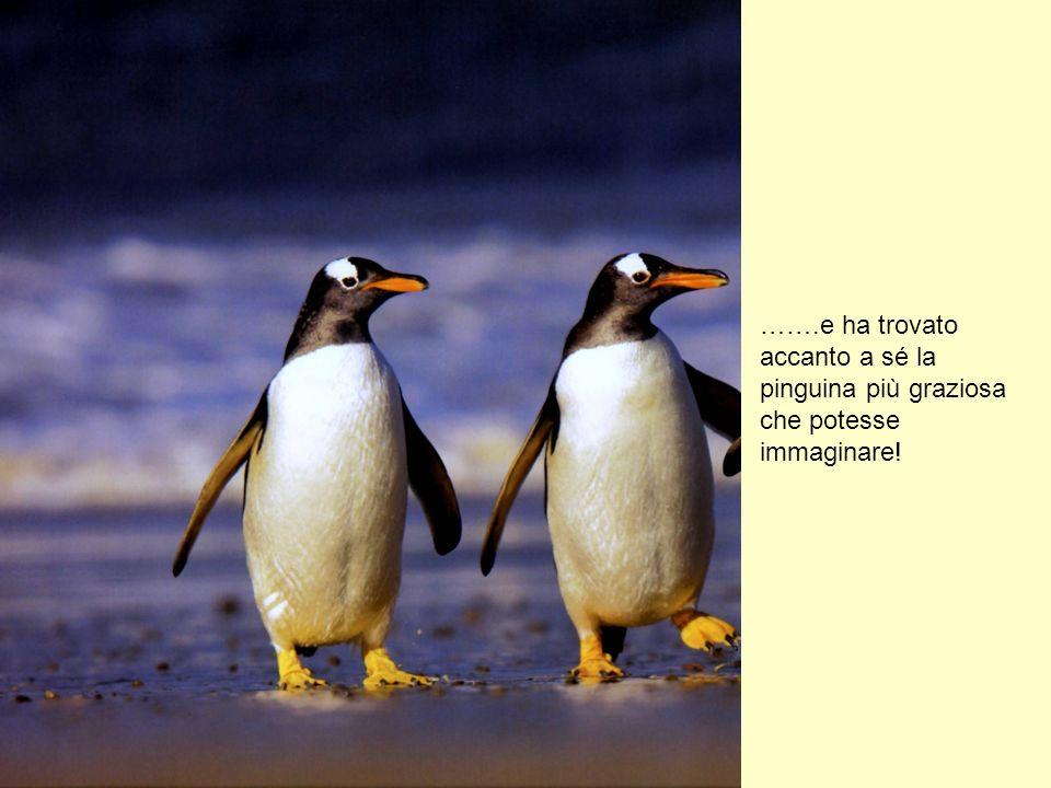 Volete sapere dove si trova adesso il nostro pinguino? Abita su una spiaggia di ghiaccio piena di pinguini. E non si chiama più SOLO SOLO ma TUFFATORE