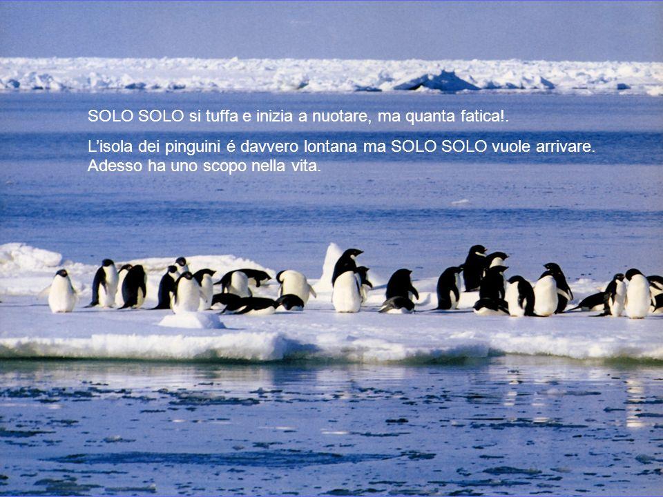 Adesso possiamo diventare amici ! Il gabbiano fa un sacco di domande al pinguino e poi lo invita ad andare allisola dei pinguini e gli indica la strad