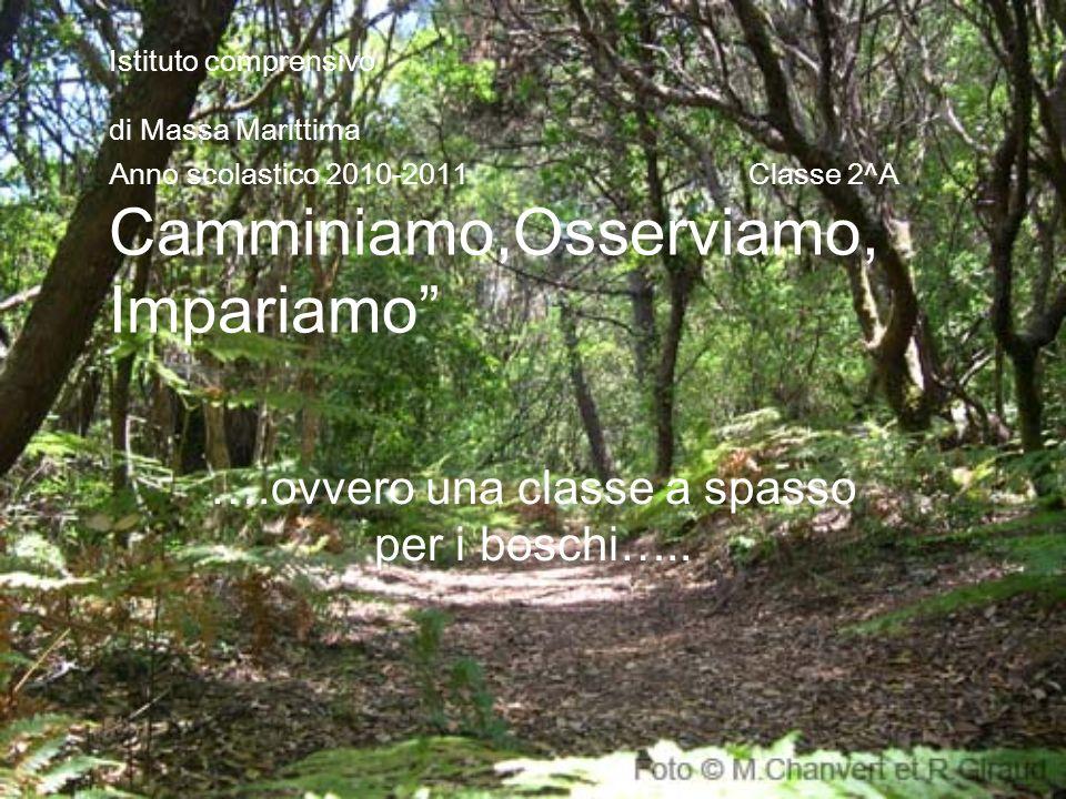 Istituto comprensivo di Massa Marittima Anno scolastico 2010-2011 Classe 2^A Camminiamo,Osserviamo, Impariamo ….ovvero una classe a spasso per i bosch