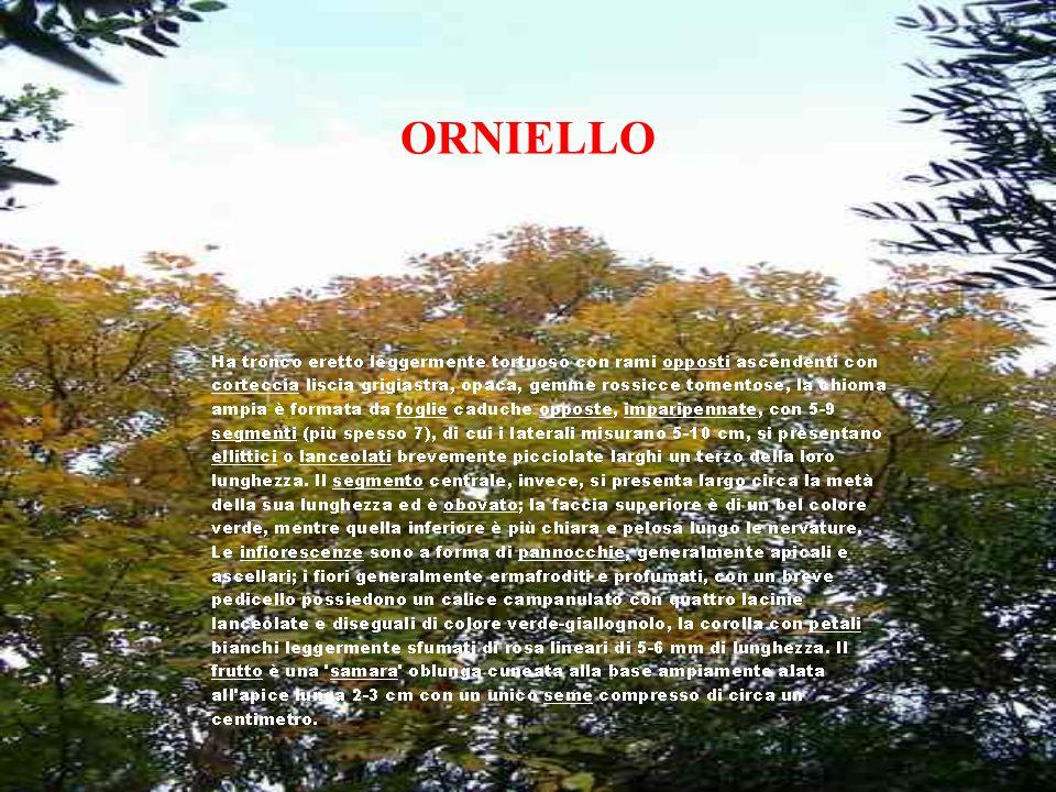 ORNIELLO
