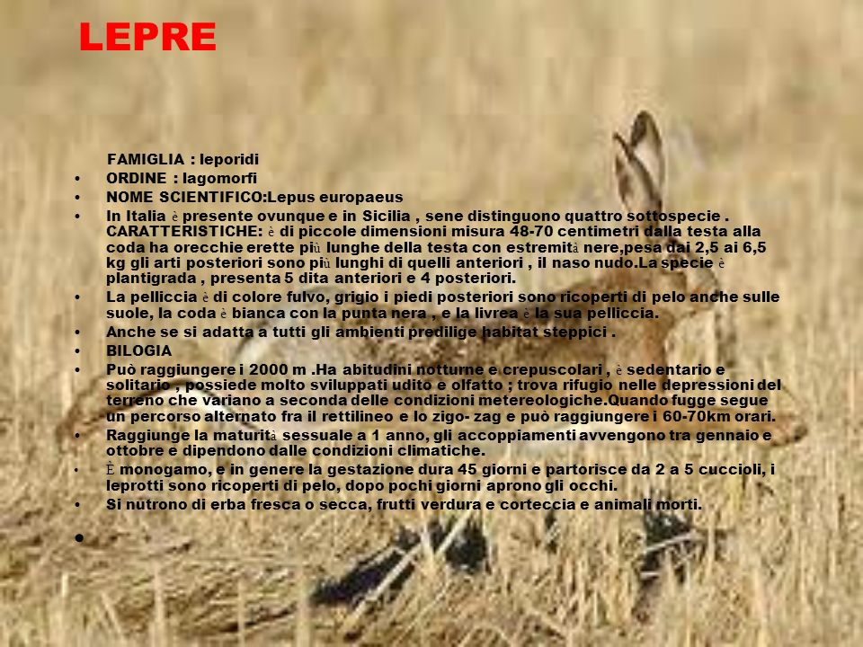 LEPRE FAMIGLIA : leporidi ORDINE : lagomorfi NOME SCIENTIFICO:Lepus europaeus In Italia è presente ovunque e in Sicilia, sene distinguono quattro sott