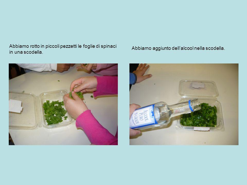 Abbiamo rotto in piccoli pezzetti le foglie di spinaci in una scodella. Abbiamo aggiunto dellalcool nella scodella.