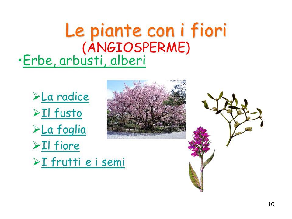 Le piante con i fiori Erbe, arbusti, alberi La radice Il fusto La foglia Il fiore I frutti e i semi 10 (ANGIOSPERME)
