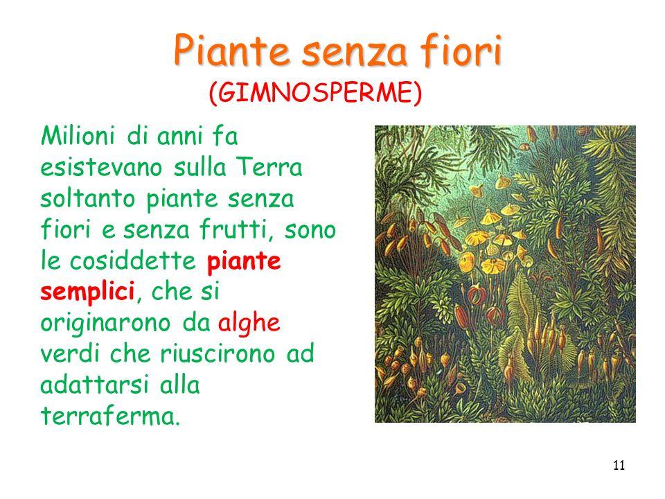 Piante senza fiori Milioni di anni fa esistevano sulla Terra soltanto piante senza fiori e senza frutti, sono le cosiddette piante semplici, che si or