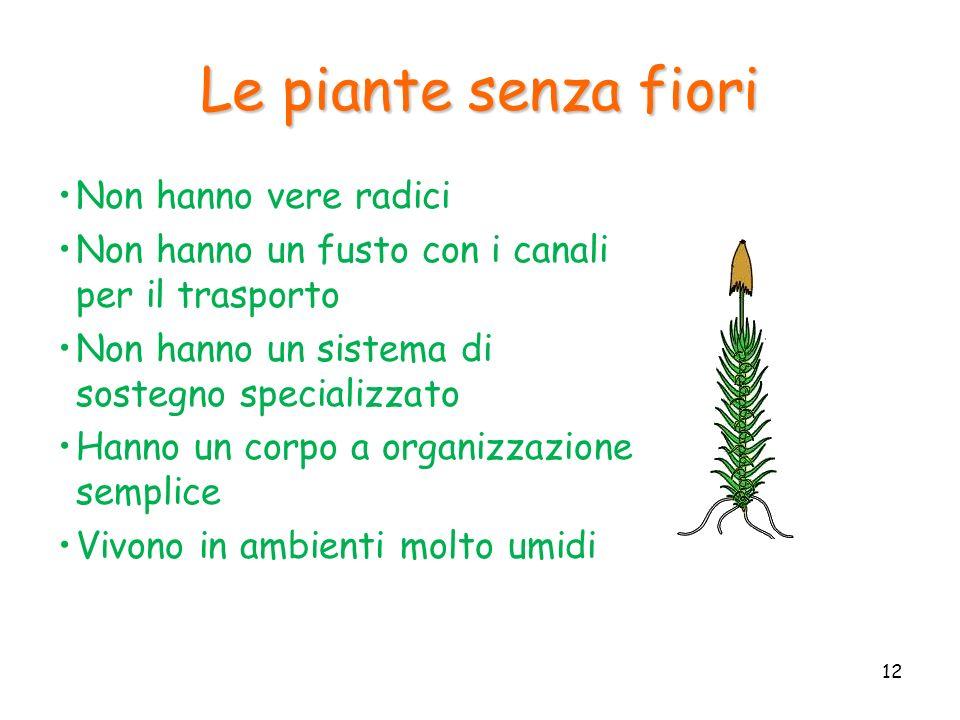Le piante senza fiori Non hanno vere radici Non hanno un fusto con i canali per il trasporto Non hanno un sistema di sostegno specializzato Hanno un c