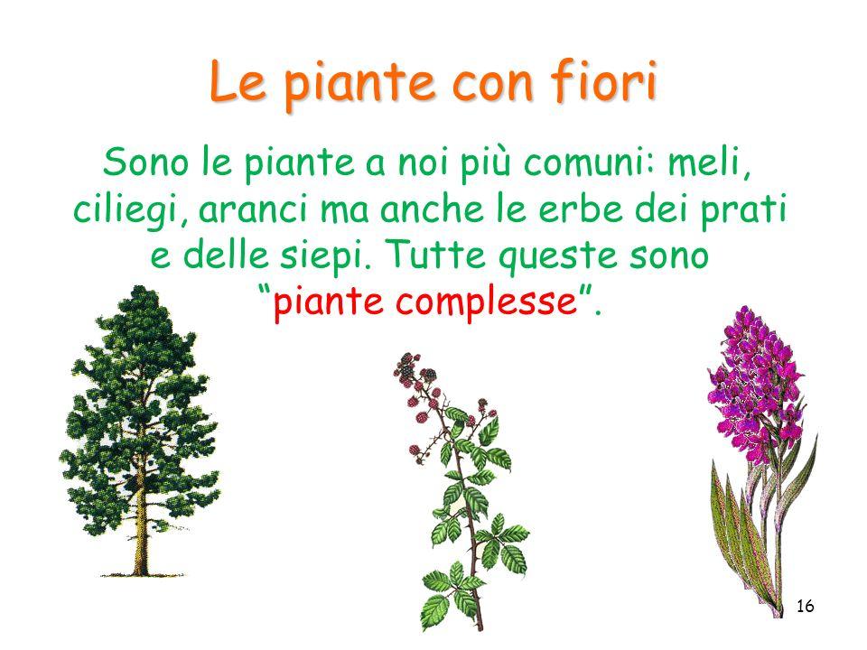 Le piante con fiori Sono le piante a noi più comuni: meli, ciliegi, aranci ma anche le erbe dei prati e delle siepi. Tutte queste sonopiante complesse