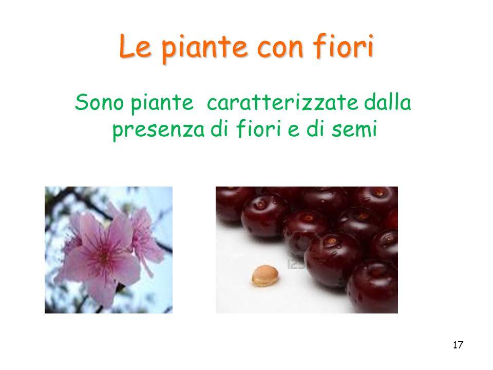 Le piante con fiori Sono piante caratterizzate dalla presenza di fiori e di semi 17