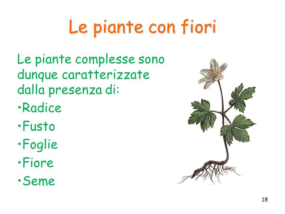 Le piante con fiori Le piante complesse sono dunque caratterizzate dalla presenza di: Radice Fusto Foglie Fiore Seme 18