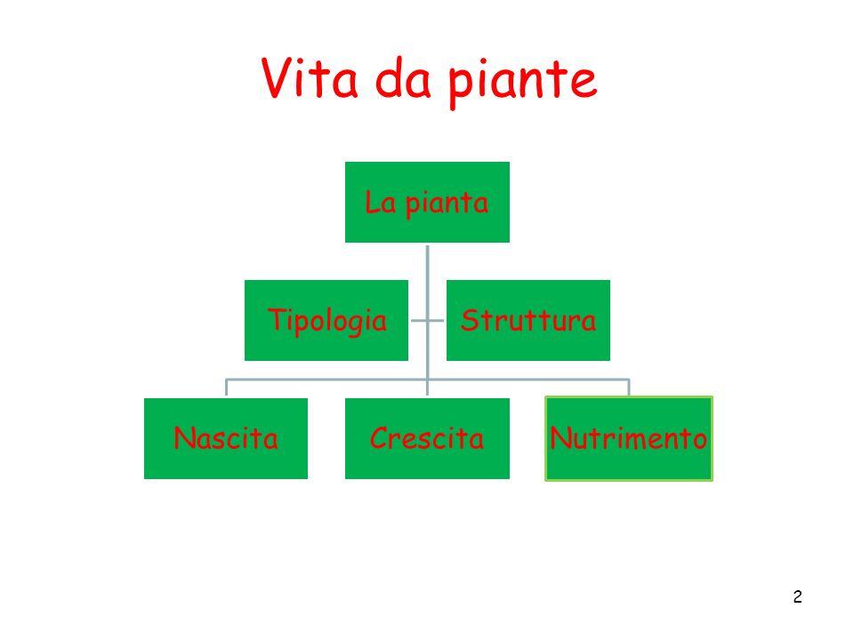 Vita da piante La pianta NascitaCrescitaNutrimento TipologiaStruttura 2