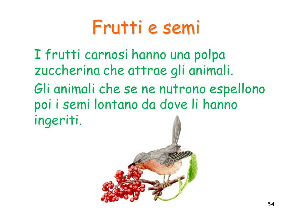 I frutti carnosi hanno una polpa zuccherina che attrae gli animali. Gli animali che se ne nutrono espellono poi i semi lontano da dove li hanno ingeri