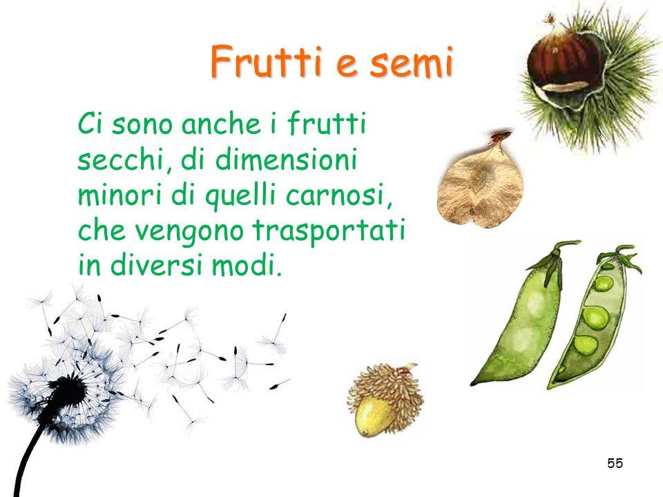 Ci sono anche i frutti secchi, di dimensioni minori di quelli carnosi, che vengono trasportati in diversi modi. Frutti e semi 55