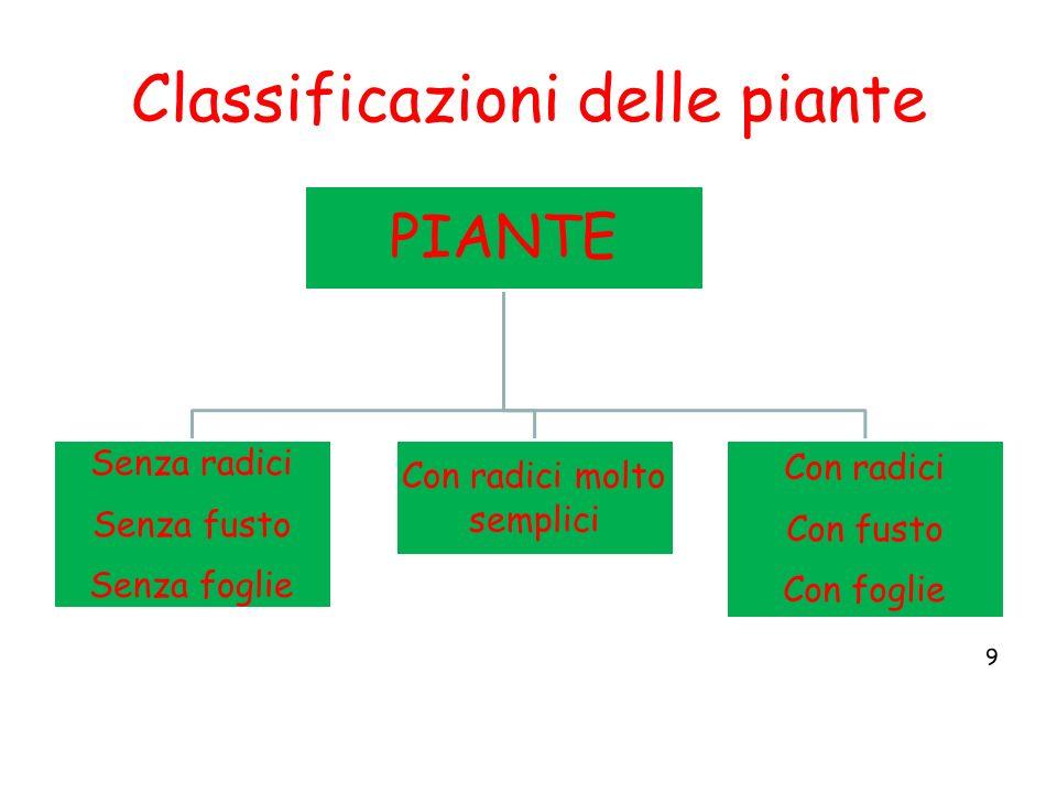Classificazioni delle piante 9 PIANTE Senza radici Senza fusto Senza foglie Con radici molto semplici Con radici Con fusto Con foglie