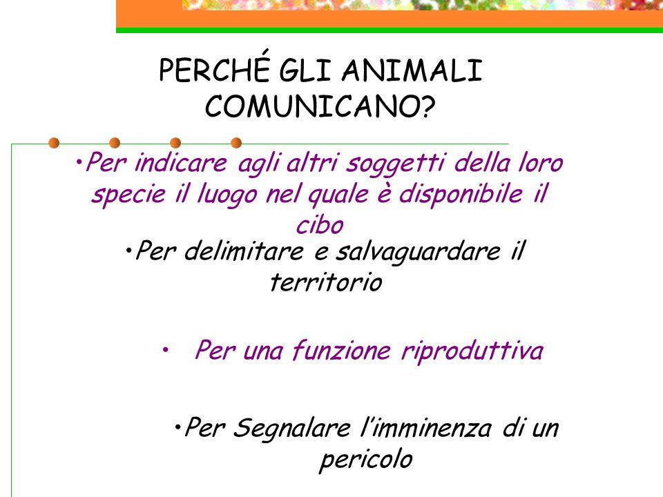 PERCHÉ GLI ANIMALI COMUNICANO? Per indicare agli altri soggetti della loro specie il luogo nel quale è disponibile il cibo Per delimitare e salvaguard