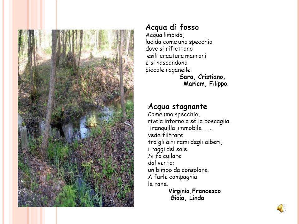 Acqua stagnante Come uno specchio, rivela intorno a sé la boscaglia. Tranquilla, immobile…….. vede filtrare tra gli alti rami degli alberi, i raggi de