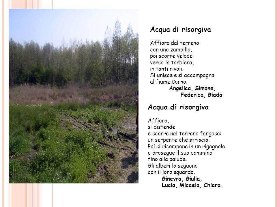 Acqua di risorgiva Affiora dal terreno con uno zampillo, poi scorre veloce verso la torbiera, in tanti rivoli. Si unisce e si accompagna al fiume Corn