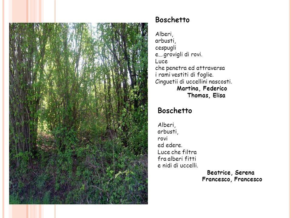 Boschetto Alberi, arbusti, cespugli e….grovigli di rovi. Luce che penetra ed attraversa i rami vestiti di foglie. Cinguetii di uccellini nascosti. Mar